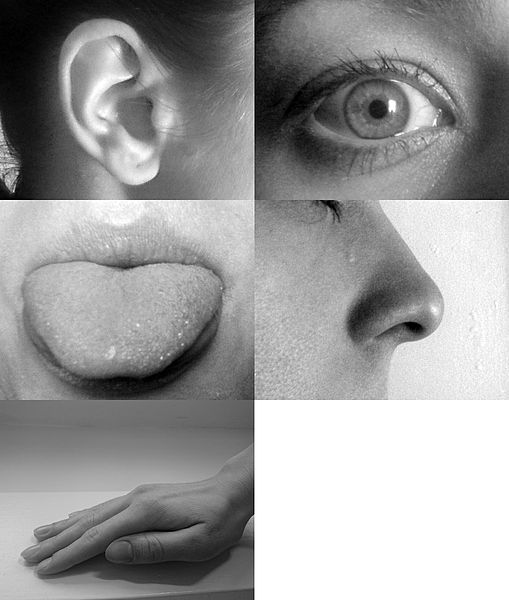 eye, ear, tongue, nose and hand