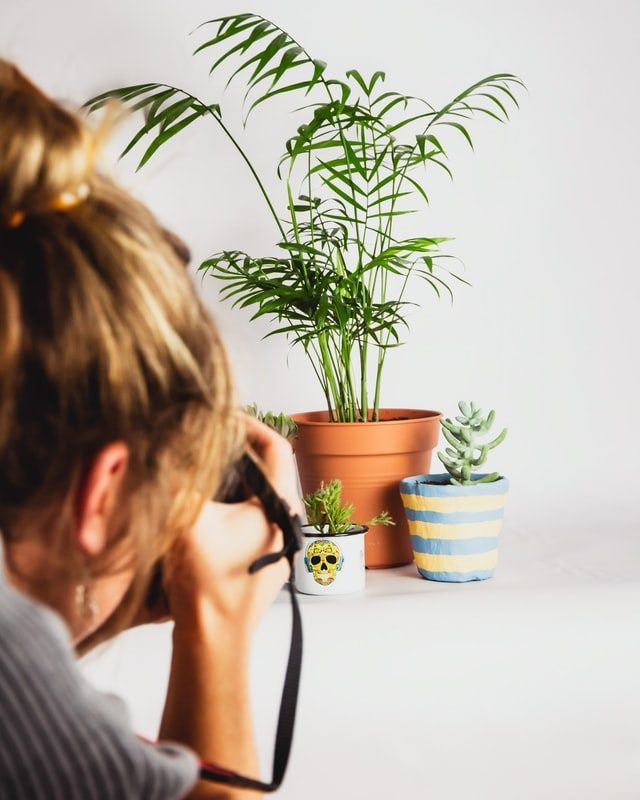 woman taking a photo of green-leafed plants